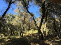 treesandskygood small